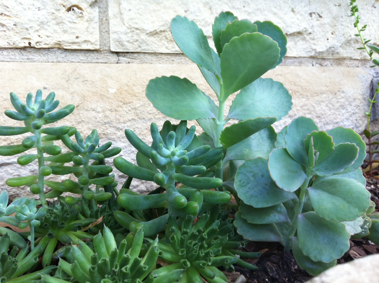 succulents | queerrocklove